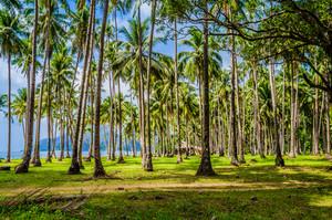 Palm trees near Corong Beach, El Nido, Palawan, Philippines