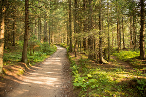 Path among the trees in summer forest. Green nature, sunny day.