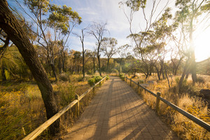 Path through  Wave Rock, Hyden, Western Australia , sunset scene .