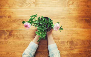 Person holding potted flower on a rustic wooden table
