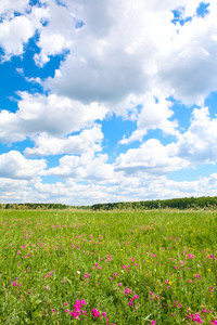 Photo of bright cloudy sky with beautiful meadow below