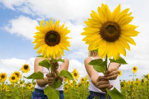 Portrait of cute girls hiding behind sunflowers on sunny day