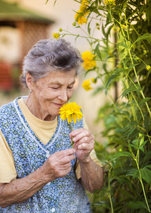 Portrait of senior woman in apron with yellow flower in the sunny garden