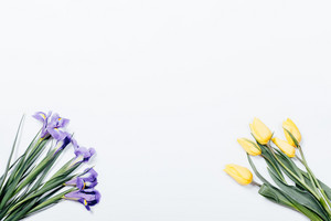 Purple irises and yellow tulips on white background, top view
