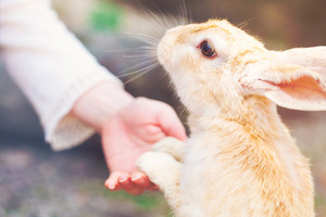 Rabbit holding hands with a senior woman