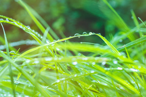 Rain dropps on green grass in sun light flares