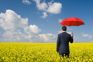 Rear view of businessman with red umbrella walking in yellow meadow