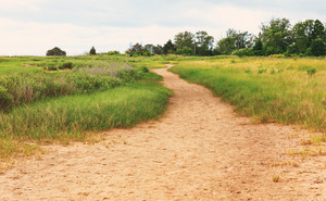 Sandy pathway trail through a grassy area