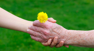 Senior and young hands holding a yellow dandelion
