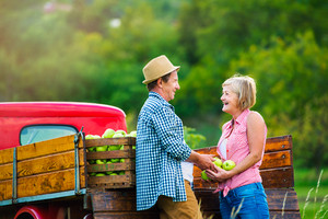 Senior couple harvesting fruit, standing at red vintage pickup truck, woman holding apples