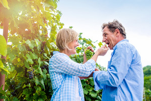 Senior couple in blue shirts holding bunch of ripe green grapes in their hands, eating it