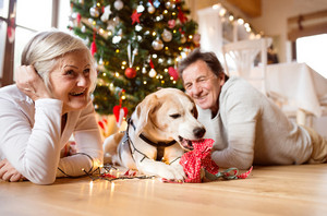 Senior couple lying on the floor in front of illuminated Christmas tree inside their house with their dog chewing ornaments.