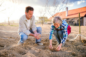 Senior couple planting potatoes in their back yard into the ground