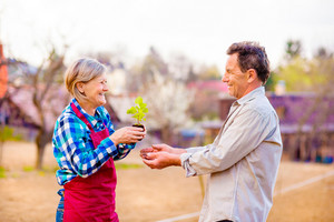 Senior couple, senior woman and man holding seedling in their garden, spring blooming nature