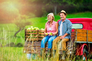 Senior couple sitting in back of vintage red pickup truck, after harvesting apples