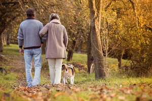 Senior couple walking their beagle dog in autumn countryside