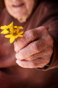 Senior lady holding or offering a yellow flower