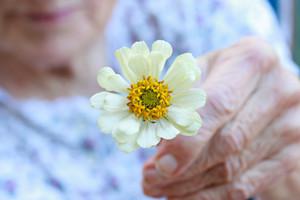 Senior lady holding white zinnia flower