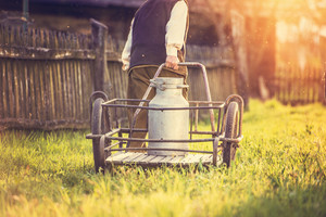 Senior man carrying a milk kettle on his farm