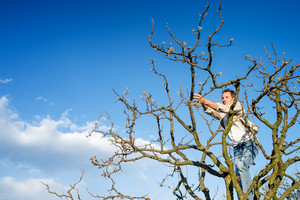 Senior man pruning branches at tree top against blue sky with clouds
