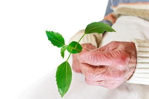 Senior woman holding green plant over white background