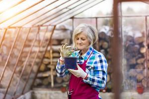Senior woman planting seedlings in a greenhouse