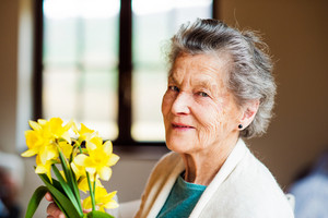 Senior woman sitting by the window and holding bouquet of yellow daffodils