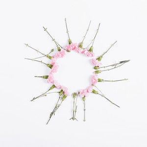 Small pink flowers are in the shape of circle on white background, top view, place for text