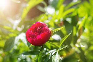 Spring flower in the garden on sunny day