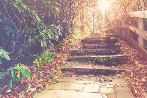 Stone stairway in an autumn forest toward sunset