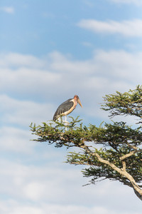 Stork in a tree in Serengeti Africa