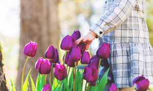 Toddler girl playing with purple tulips in her spring garden