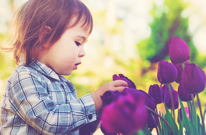 Toddler girl playing with purple tulips outside in spring
