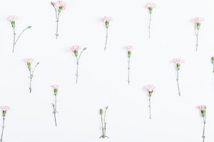 Top view of small flowers lay on a white background