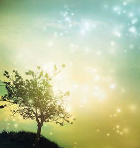 Tree silhouette at green yellow colored twilight