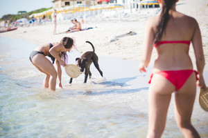 two beautiful young women playing with dog at the beach in summertime