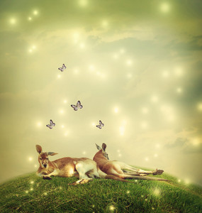 Two Kangaroos in a fantasy hilltop landscape with butterflies