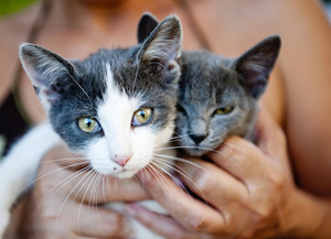 Two kittens are enjoying the hands hold