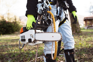 Unrecognizable lumberjack with harness and chainsaw prepared for pruning a tree. A tree surgeon, arborist going to climb a tree in order to reduce and cut his branches.