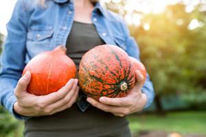 Unrecognizable woman in denim shirt working in her garden harvesting pumpkins. Sunny autumn nature.