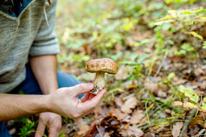 Unrecognizable young man picking mushrooms in autumn forest, holding it in his hand, close up