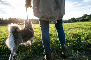 Unrecognizable young woman on a walk with a dog in green sunny nature