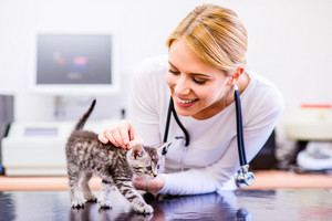 Veterinarian with stethoscope holding little sore cat. Young blond woman in white uniform working at Veterinary clinic.