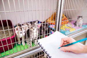 Veterinarian writing into a notepad about health of cats in cage. Hand of unrecognizable woman working at Veterinary clinic.