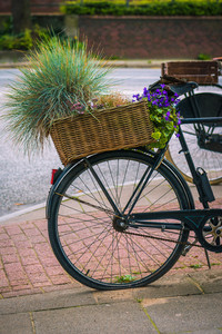 Vintage bycicle with basket and green plants parked on the street