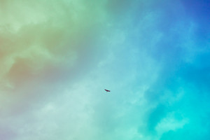 Vintage colorful filtered view of a bird flying in the sky - freedom concept