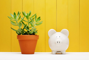 White Piggy Bank Beside Small Green Plant on a Pot with Yellow Wooden Wall Background