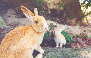 Wild rabbit in a summer field