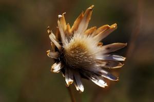 Wild strange plant