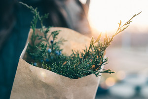 Woman holds a bundle of fir branches for decorations